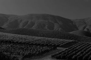 A black and white photo of views over vineyards with Western Cape mountains in the background